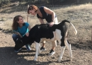 Alexandra and Caroline with Roselynn the calf at her sanctuary